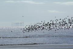 Windfarm y pájaros Fotografía de archivo libre de regalías