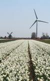 Windgenerator in bulbi sistema per quanto l'occhio può vedere, attira molti turisti Fotografia Stock