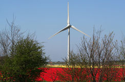 Windgenerator in flower bulbs field as far as the eye can see, attracts many tourists. Royalty Free Stock Photos