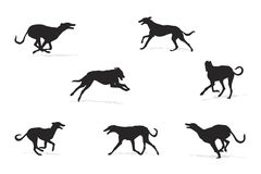 Windhound running silhouettes Stock Photography