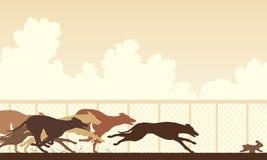 Windhundhunderennen Lizenzfreie Stockfotografie