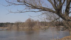 Windige Flussb?ume stock video