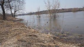 Windige Flussb?ume stock footage