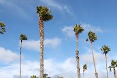 Windige Palmen Santa Barberas Stockbild