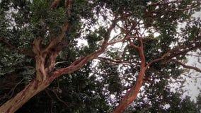 Windiger Tag im Wald stock footage