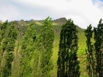 Windiger Tag und grüne Bäume nahe den Bergen lizenzfreies stockfoto