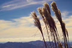 Windiger und sonniger Tag lizenzfreies stockfoto