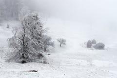 Windiger Winter Stockbild