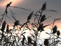 Windiges Wetter Lizenzfreies Stockfoto
