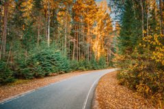 Winding Asphalt Road Path Walkway Through Autumn Forest Royalty Free Stock Photos