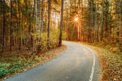 Winding asphalt road path walkway through autumn forest. Sunset Royalty Free Stock Image