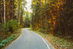 Winding asphalt road path walkway through autumn forest. Sunset Royalty Free Stock Images
