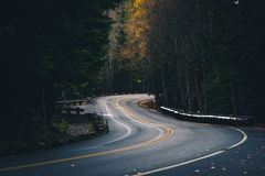 Winding autumn forest road. Stock Image