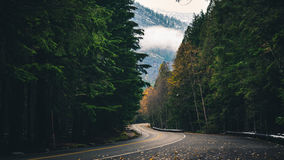 Winding autumn forest road. Stock Photography