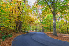 Winding Autumn Road. Road winding through trees with fall colors and leaf coverd ground. Cherokee Park Louisville, KY stock photos