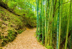 Winding Bamboo Forest Trail Tsumago Castle Stock Image