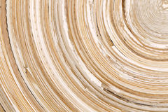 Winding bamboo texture Stock Image