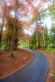 Winding bike path Royalty Free Stock Image