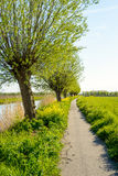 Winding bike path in a rural field in springtime Stock Photography