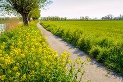 Winding bike path in a rural field in springtime Stock Photo