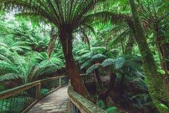 Winding boardwalk in Australian Rainforest Stock Photography