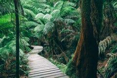 Winding boardwalk in Australian Rainforest Royalty Free Stock Photo