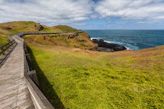 Winding boardwalk among green blossoming hills at the coastline Stock Images