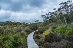 Winding boardwalk among native vegetation in Hartz Mountains Nat Royalty Free Stock Images
