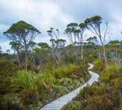 Winding boardwalk among native vegetation in Hartz Mountains Nat Royalty Free Stock Photography