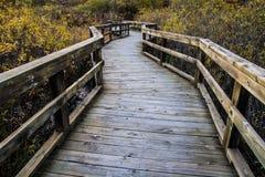 Winding Boardwalk Path Through The Wetlands Royalty Free Stock Photo