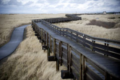 Winding boardwalk through tall grass. Boardwalk winding through a windy field of tall grass at the beach Royalty Free Stock Photography