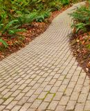 Fern brick path Royalty Free Stock Images