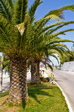 Winding coastal road and palm trees on greek island at morning Royalty Free Stock Images