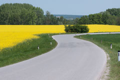 Winding country road with canola field Stock Image