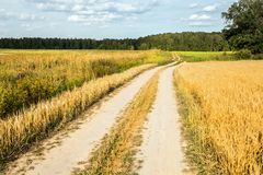 Winding country road through fields of wheat and clover Royalty Free Stock Photo