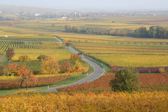 Winding country road, German Wine Road. A tractor pulls into vineyards on a back road in the Deutsch Wein Strasse area, Germany Stock Images