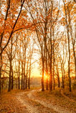 Winding Countryside Road Path Walkway Through Autumn Forest. Sun Royalty Free Stock Images