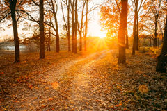 Winding Countryside Road Path Walkway Through Autumn Forest. Sun Royalty Free Stock Photos