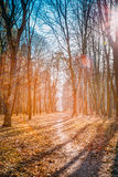Winding Countryside Road Path Walkway Through Autumn Forest. Sun Stock Photography