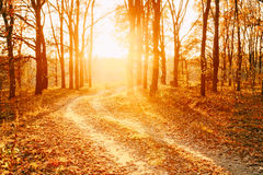 Winding Countryside Road Path Walkway Through Autumn Forest. Sunset Sunrise Stock Image