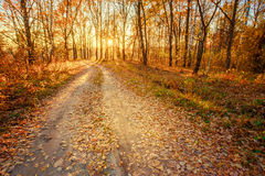 Winding Countryside Road Path Walkway Through Autumn Forest. Sunset Sunrise Stock Photos