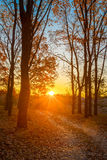 Winding Countryside Road Path Walkway Through Autumn Forest. Sunset Royalty Free Stock Images