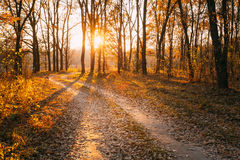 Winding Countryside Road Path Walkway Through Autumn Forest. Sunset Stock Image