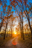 Winding Countryside Road Path Walkway Through Autumn Forest. Sunset Sunrise Stock Photo