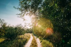 Winding Countryside Road Path Walkway Through Summer Deciduous F royalty free stock photography