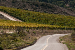 Winding Countty Road By Vineyard Royalty Free Stock Image