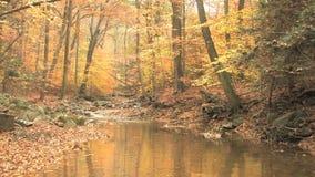 Winding creek through autumn woods stock footage