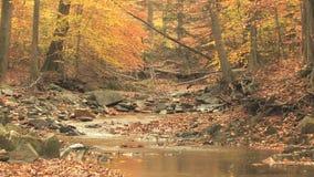 Winding creek through autumn woods stock video