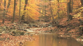 Winding creek through autumn woods zoom out stock video footage