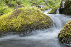 Winding creek Stock Images